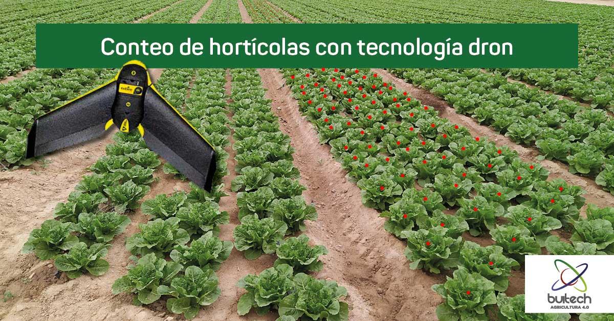 Conteo en hortícolas con dron